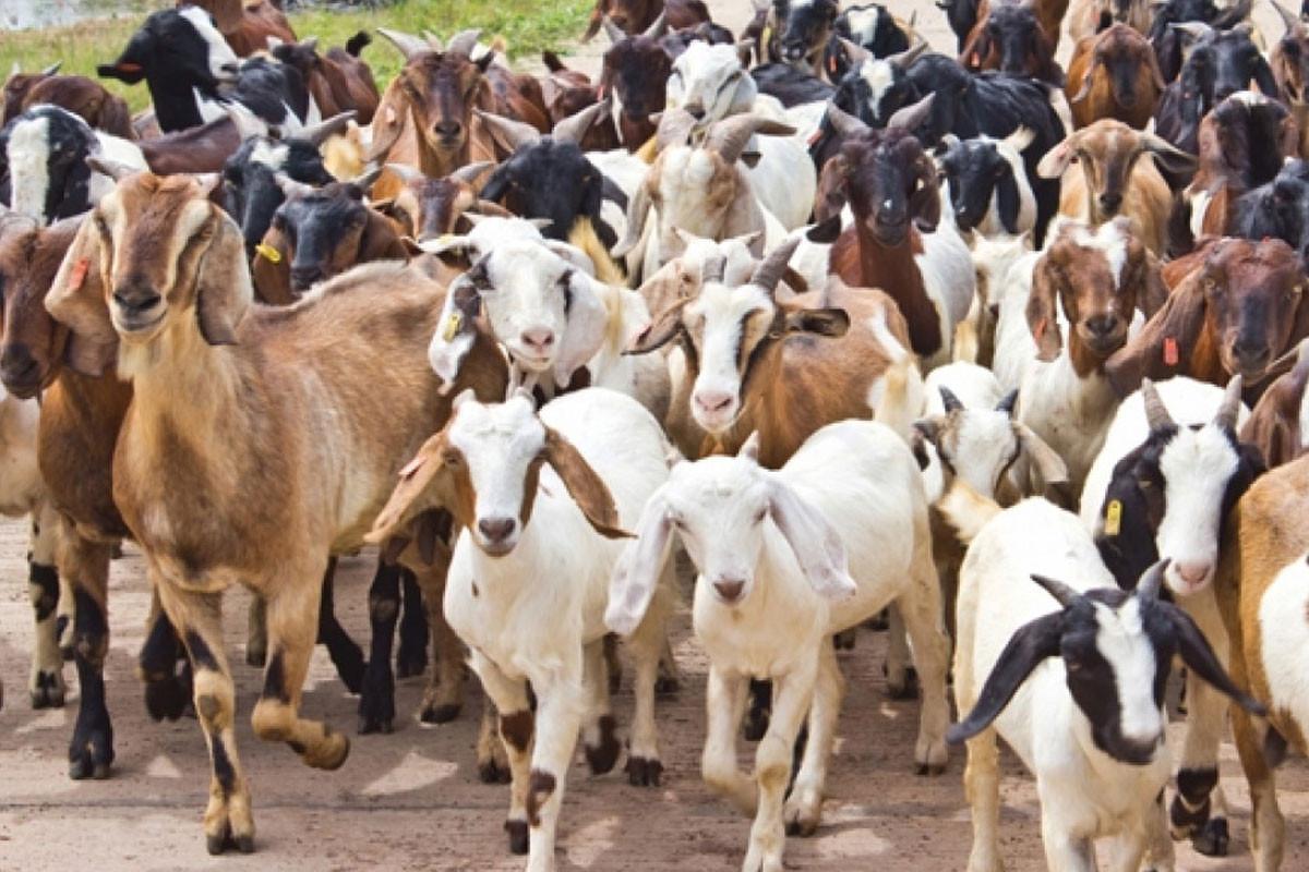 जम्मु काश्मीर: मुख्य सचिव नवीन चौधरीद्वारा बडगाम अनुगमन, कृषि कार्यको समीक्षा